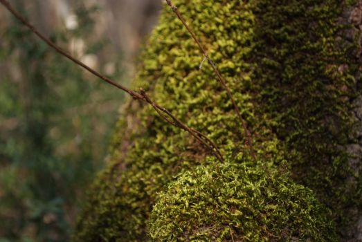 Mossy by Very-Free-Stock
