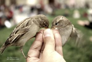 Bird feeding while starving by alahay