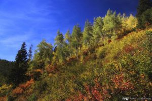 A Mix of Autumn Colors by mjohanson