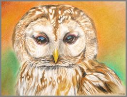 Tawny owl by Verenique