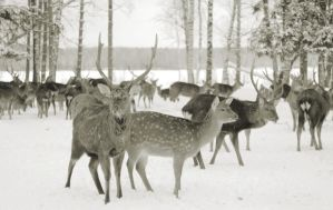 Deers2 by TinaGrey