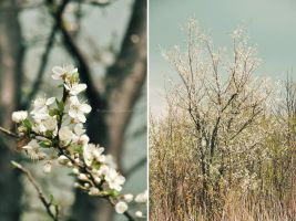 Blossom from near and far by fotografka