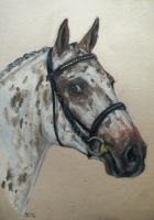 Appaloosa Stallion by Jniq