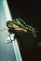 Papilio Machaon II by Kalhyia