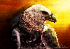 Harpy Eagle Speed Paint by PrinceofPride