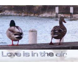 Love is in the air - WP by superjuju29