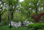 Central Park 26 by LucieG-Stock