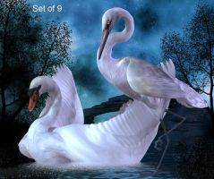Swans by oldhippieart