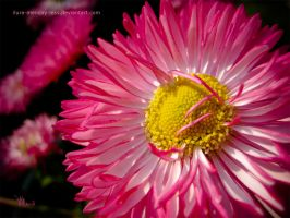 queen of daisies by ilura-menday-less