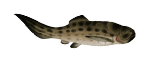TTDPC 4: Favourite Devonian Animal by PLASTOSPLEEN