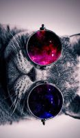 Cat-with-cosmos-glasses-animal-hd-wallpaper-19 by MrHaoSac