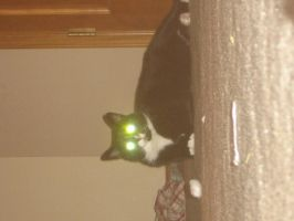 my demon cat on the ceiling by s1ck-1n-d4-h34d