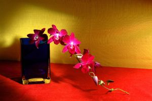 Pink Orchid in Blue Vase by Art-Photo