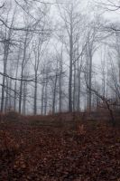 Foggy Forest 09 by sacral-stock