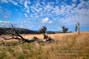 Highlands Country by FireflyPhotosAust
