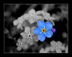 The different blue by Janorien