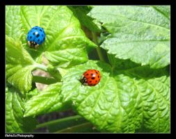 Ladybugs by iReNaTa