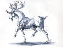 Antlers by ZulayaWolf