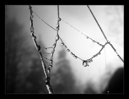 Cold Spiderweb by pitchblacknight