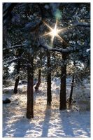 Snowy Bright by chromosphere
