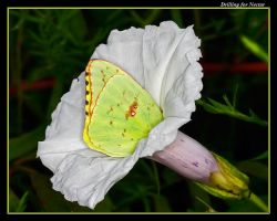 Drilling for Nectar by boron
