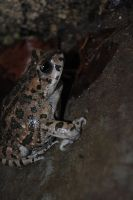 it's a toad 3 by AngelicPicture