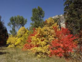 Fall colors 3 by esjay1986