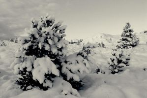 Snow and pine by fotojenny