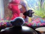 Mini-fish and Henri by altearithe