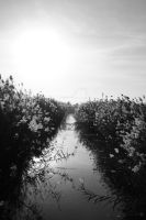 Canal BW by cecphotography