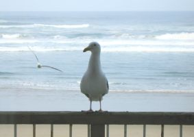Seagull Friends by MogieG123