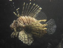 lb1-63 Lion Fish 2 by bstocked
