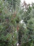 Dew Drops on Spider Webs by Queen-of-Carthage