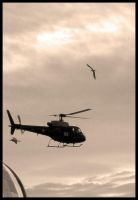 Seagull and Chopper by geckokid