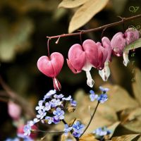 Don't forget about the hearts by Kami-no-kuroi-namida