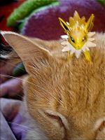 My cat play with Jolteon by Modette72