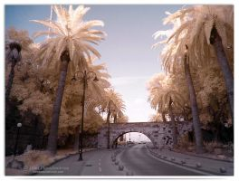 Palm Tree Avenue II - infrared by LightSculpting
