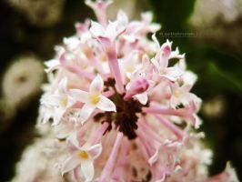 Blooming Flowers. by Sparkle-Photography