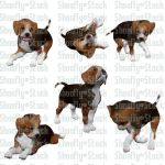 Beagle Puppies Stock Pack 3 by Shoofly-Stock