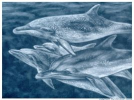 spotted dolphins -pastel by LisaCrowBurke