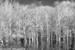 Reflections IR by IaiaRose