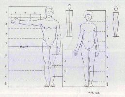 Human Body Proportion by HuoXingC