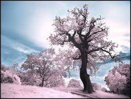 Magic Tree infrared... by MichiLauke