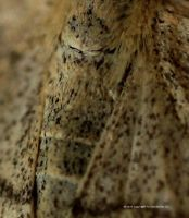SECTION OF TINY MOTH 1 by GeaAusten
