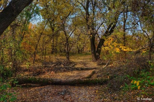 Path In Autumn Forest by t-maker