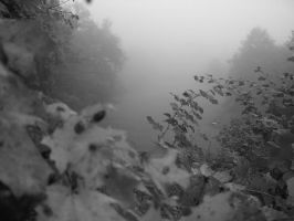 .: Lost in the Fog :. by Kratos-Dream