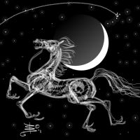 Moon Bones Horse by DonnaBarr
