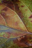 Leaf Texture by screamobaby