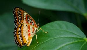 Leaf testing butterfly by forgottenson1