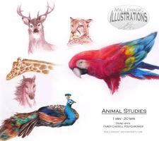 Animal Studies by Mallemagic